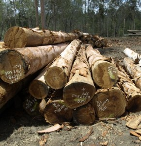 Photo of tree logging in Whangarei logging timber