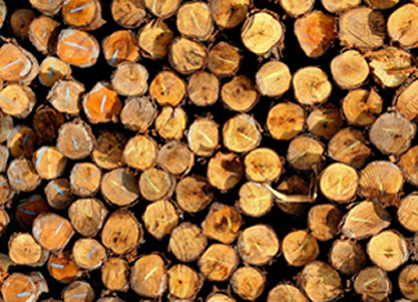 Firewood Supplies Whangarei