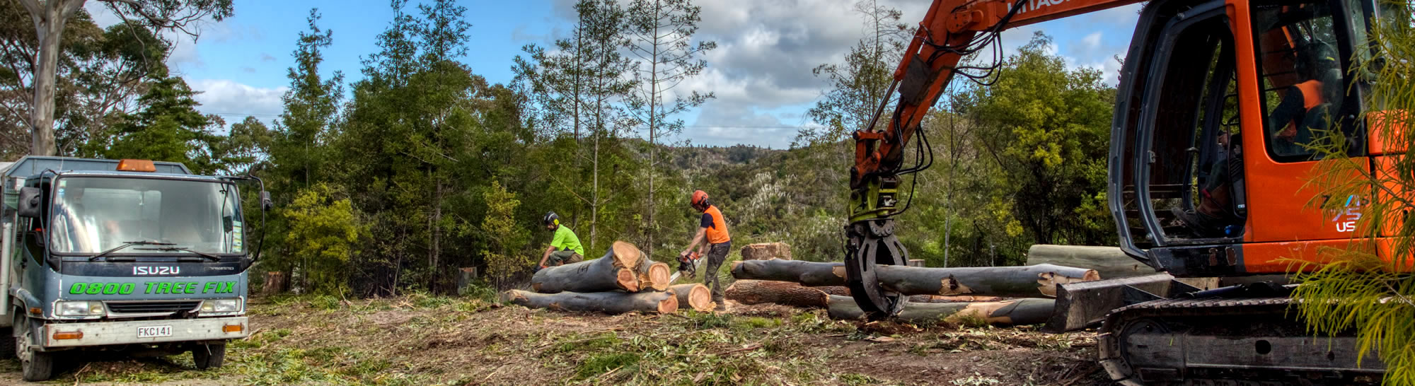 professional tree services whangarei